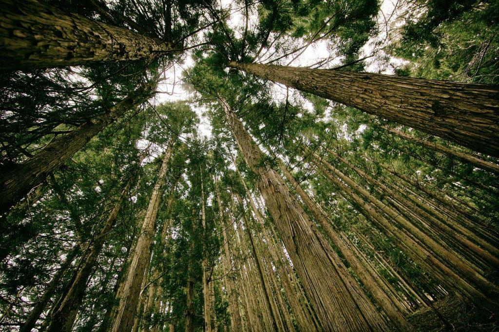 photo en contre-plongée d'une forêt